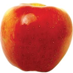 Ябълка Сорт Мел Роуз